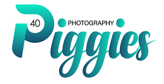40 Piggies Photography